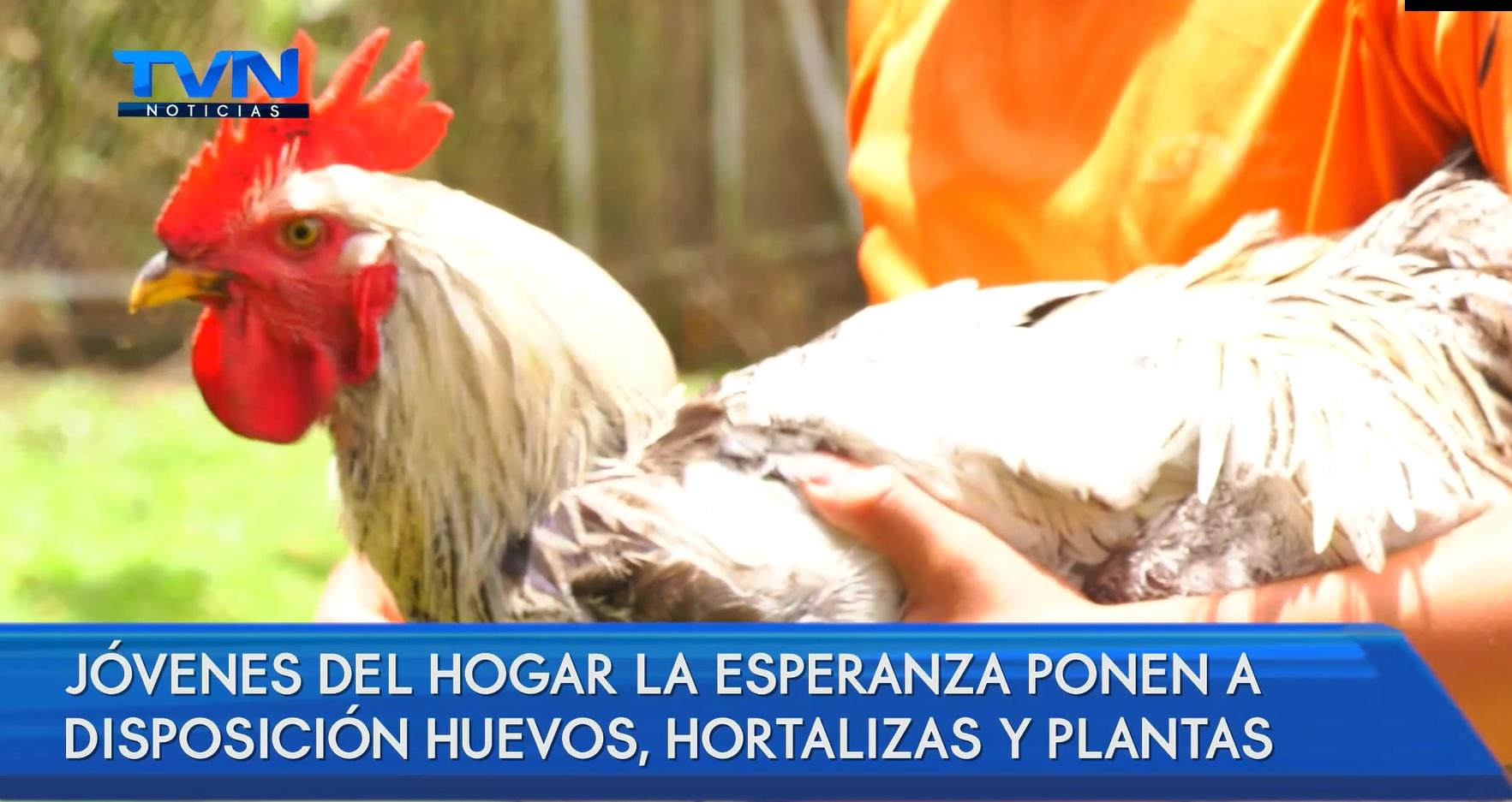 Jóvenes del Hogar La Esperanza construyen huerta y gallinero