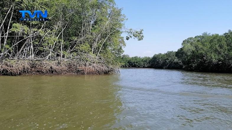 Inició recuperación de Humedal Estero Puntarenas y Manglares asociados.