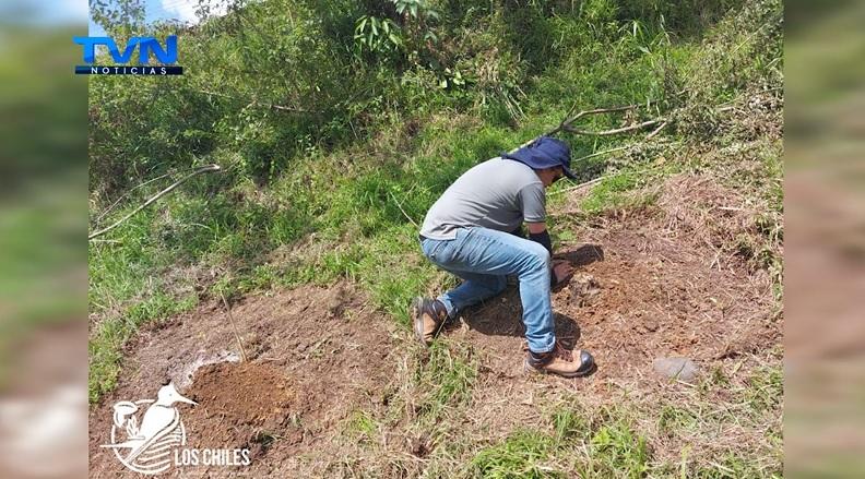 Árboles embellecerán el sector de Tablillas en Los Chiles